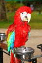 Free Scarlet Macaw Royalty Free Stock Photo - 21213255