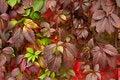 Free Autumn Leaves Stock Image - 21219361