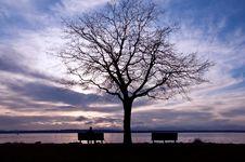 Free Lonely Tree Royalty Free Stock Photos - 21210168