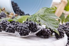 Free Blackberries Stock Photography - 21210962