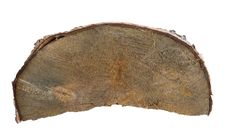 Tree Trunk Cross Section Royalty Free Stock Image