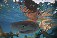 Shark Escapade Stock Photo