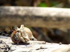 Free Hermit Crabs Happy. Royalty Free Stock Image - 21213196