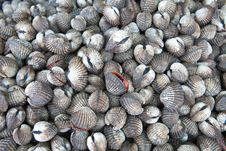 Free Cockles At The Market Royalty Free Stock Photography - 21213477