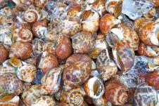 Free Fresh Sweet Shellfish At The Market Stock Photo - 21213560