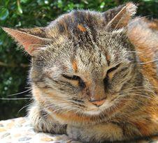Free Sleepy Cat Stock Images - 21217184
