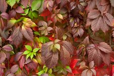 Free Autumn Leaves Stock Image - 21219361