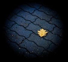 Free Lone Leaf On The Ground Stock Image - 21223631