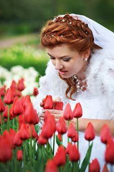 Free Beautiful Bride And Red Tulips Stock Photos - 21225983