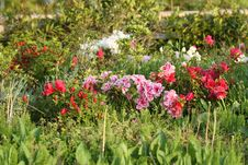 Free Flower Garden Royalty Free Stock Image - 21226296