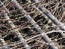 Free Barbed Wire Stock Photography - 21227822