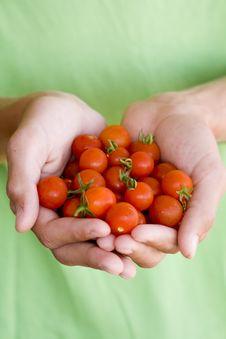 Free Tomatoes Royalty Free Stock Photography - 21229587