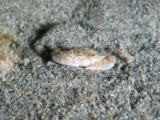 Free Crab Under The Sand Stock Photos - 21229773