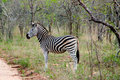 Free Striped Zebra In Africa Stock Images - 21232794