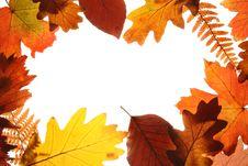 Free Autumn Leaves Background Stock Photo - 21230370