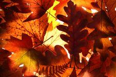 Free Autumn Leaves Background Royalty Free Stock Photos - 21230398