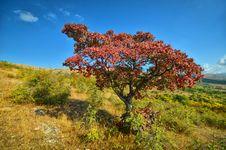 Free Autumn Trees Stock Image - 21231671