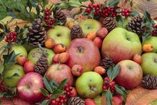 Fresh Ripe Apples  In Autumn Stock Images