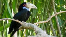 Free A Toucan On A Tree Stock Photos - 21234033