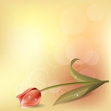 Free Pastel Background With Tulip Royalty Free Stock Images - 21235429