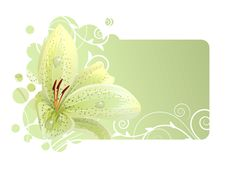 Free Beautiful Frame With White Lily Stock Images - 21235514