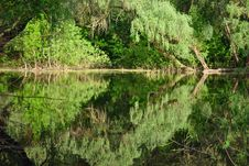 Free Boggy River Royalty Free Stock Photography - 21236047