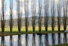 Free Poplars Trees Stock Photos - 21237453