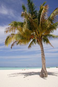 Free Palm Tree On A Sandy Beach Stock Photography - 21238382