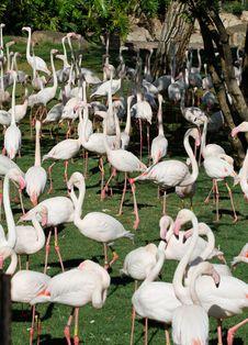 Free Flamingo Royalty Free Stock Photo - 21238545