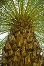 Free Palm Tree Royalty Free Stock Photography - 21248877