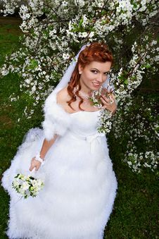 Free Happy Bride In Cherry Garden Royalty Free Stock Photography - 21241997