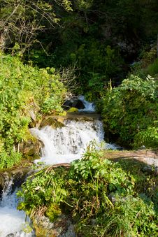 Beautiful  Forest And Waterfall In The  Kazakhstan Stock Image