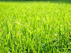 Free Green Cut Grass Royalty Free Stock Image - 21246036