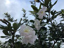 Free Spring In Lihue On Kauai Island, Hawaii. Royalty Free Stock Photo - 212471705