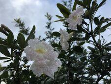 Free Spring In Lihue On Kauai Island, Hawaii. Royalty Free Stock Photo - 212471745