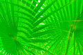 Free Green Tropical Sheet Royalty Free Stock Images - 21253279