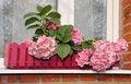 Free Hydrangea At A Window Royalty Free Stock Photo - 21254015