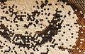 Free Honey Comb Stock Image - 21257911