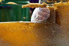 Free Honey Comb Stock Photos - 21250763