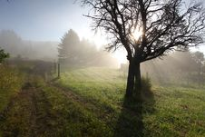 Free Sun Rays In Meadow Royalty Free Stock Photo - 21253015