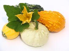 Free Pumpkin Stock Photo - 21253250