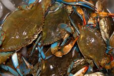 Free Blue Crabs Stock Image - 21253841