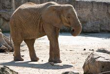 Free African Elephant Stock Image - 21254561