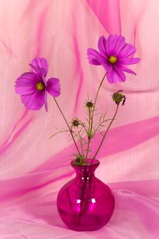 Free A Pretty Pink Flower In Vase Royalty Free Stock Photography - 21255437