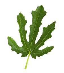 Free Green Leaf Stock Photos - 21255763