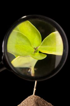 Free Magnifying Glass Royalty Free Stock Photography - 21256347