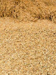 Free Pile Of Paddy Royalty Free Stock Images - 21258119
