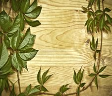 Free Wild Vine Branch On Wooden Background Royalty Free Stock Images - 21258899