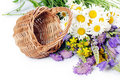 Free Beautiful Flowers In A Basket Stock Image - 21260081