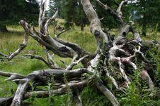 Free Tree Trunk Royalty Free Stock Photos - 21260008